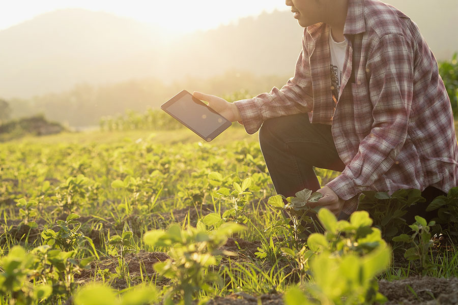 Insurance Quote - View of Farmer Kneeling in His Field of Crops Using a Tablet
